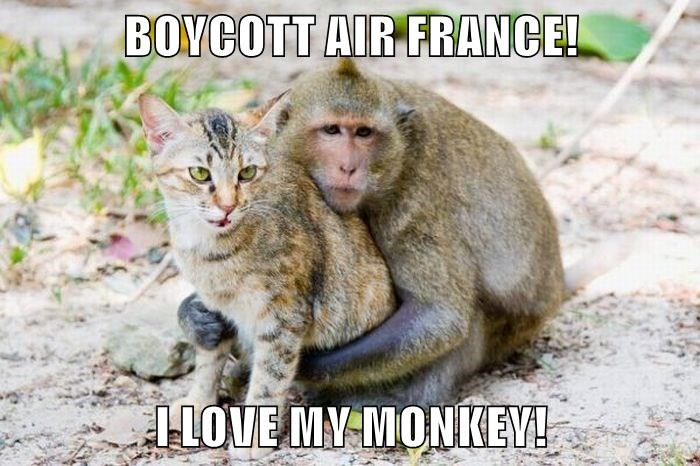 LOLCat Says Boycott Air France